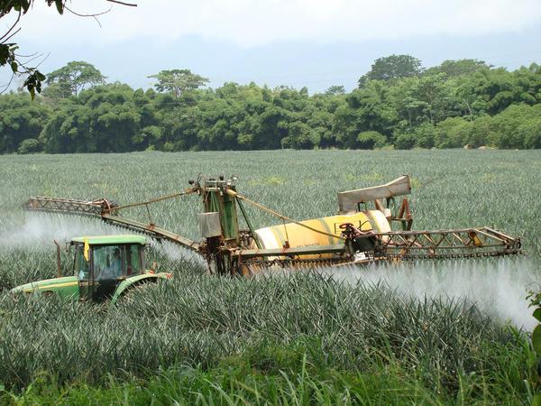 A proposito de un reciente foro sobre la expansion pinera en Costa Rica5
