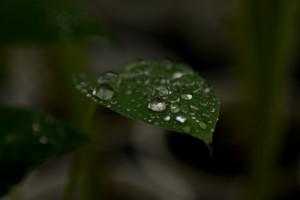 Costa Rica busca liderazgo en uso de isotopos