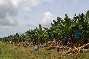 UCR Sector agro requerira dos anos para recuperarse