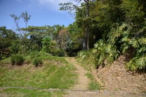 15/01/2014;Finca 4;Propiedad de la Universidad de Costa Rica;Terreno de 7 hectareas de extension;antes fue una finca cafetalera;antres de ser adquirida por la UCR fue propiedad de una empresa llamada Casuso.Fotos/Anel Kenjekeeva