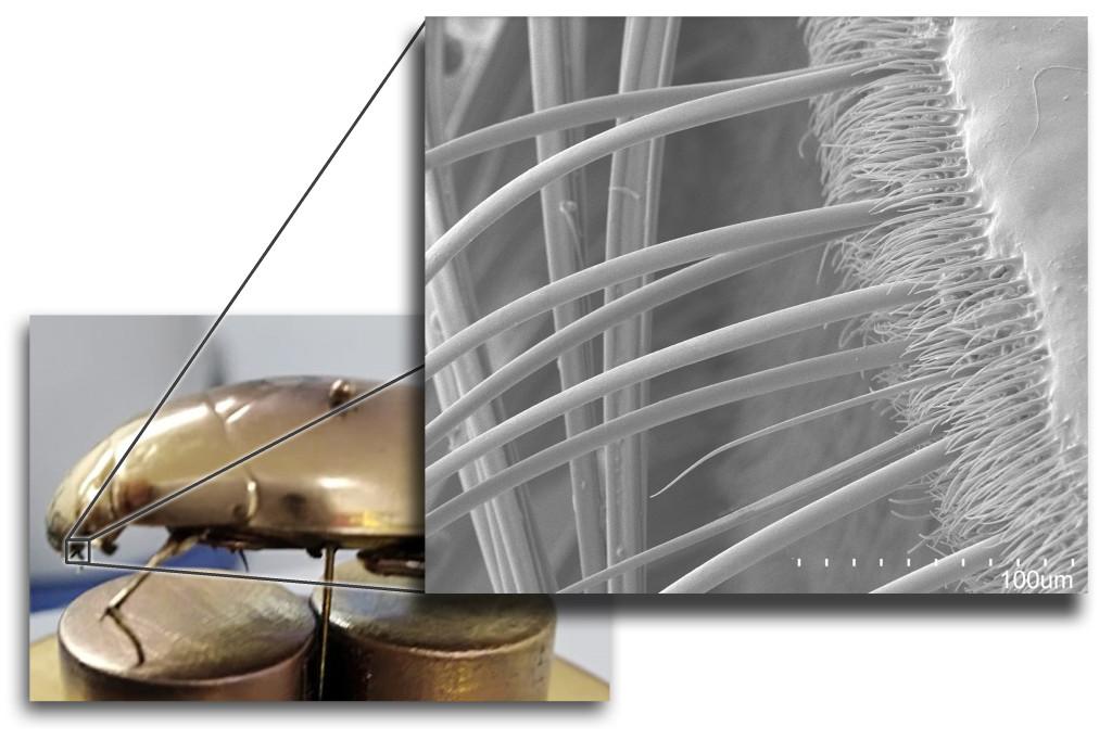 UCR Con estructuras inspiradas en la naturaleza se pretende desarrollar nuevos materiales de uso tecnologico3