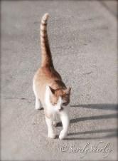 Copyright © Sherley J. Edinbarough (Surely, Sherley and/or SurelySherley), 2014. My feline friend.