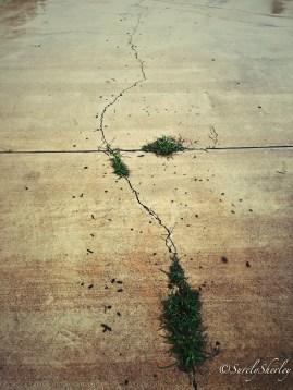 Copyright © Sherley J. Edinbarough (Surely, Sherley and/or SurelySherley), 2014. Grass growing between cracks in the cement pavement.