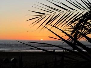 Закат и пальмы   Школа серфинга в Марокко Surf-Burg