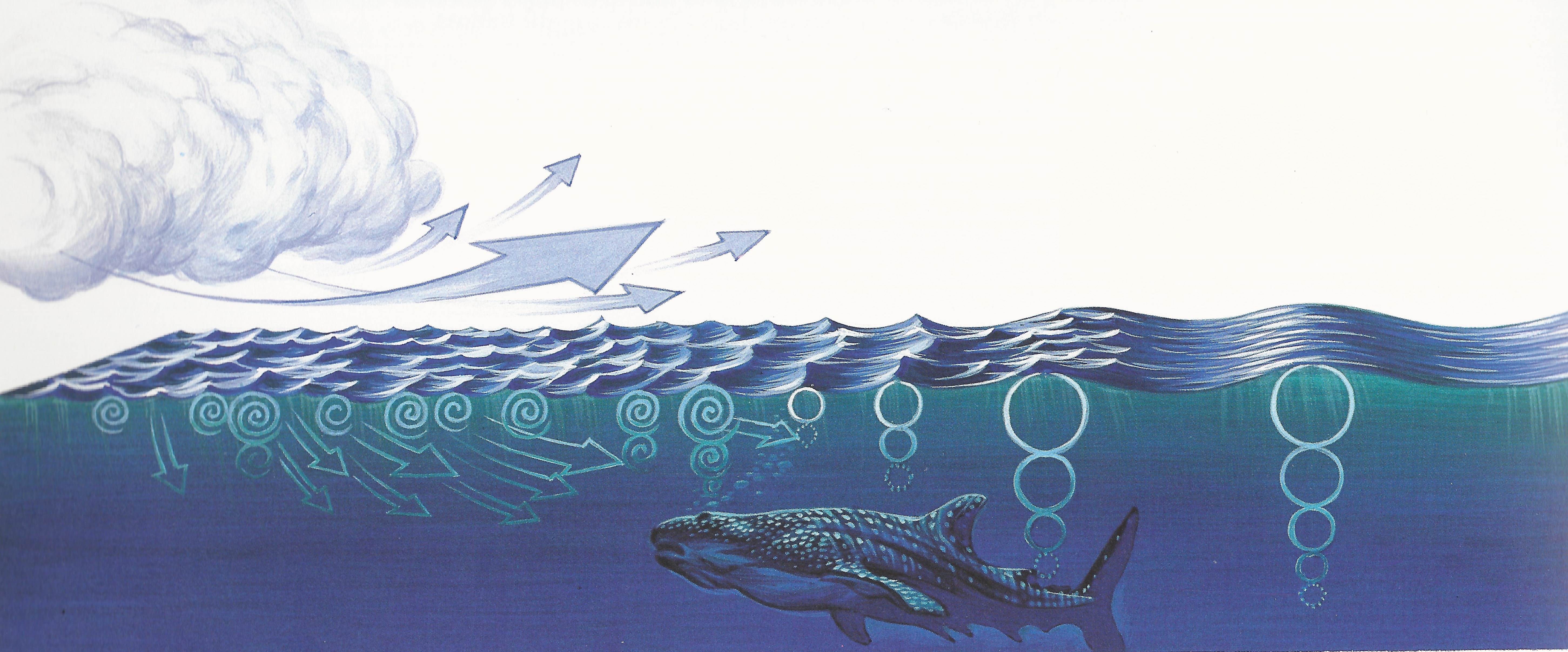 La création des vagues schéma général - Haute mer
