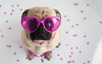 Free Valentines Pet Card By Mail