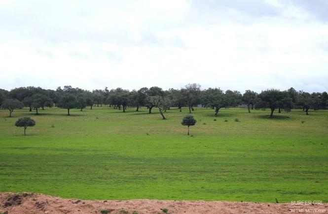 Natural landscape of the Tejo International
