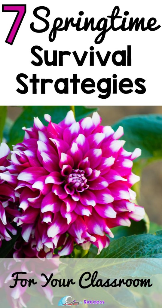 7 Springtime Survival Strategies for your Classroom   Some simple classroom management tips to help when you and your students have spring fever.