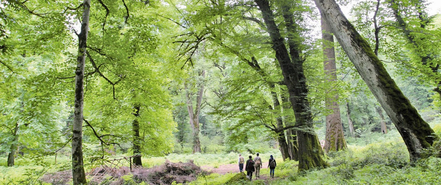Hyrcanian Forests