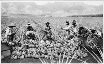 Wintersburg farm workers 1900s