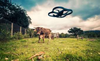 drone and cow