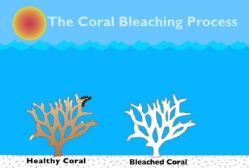 healthy vs white coral