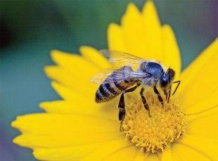 bee-on-yellow flower