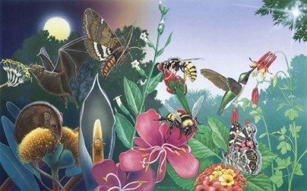 pollinators in garden group