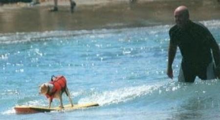 Surfing Nacho