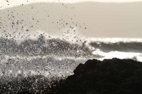 The ocean life. Photo: Pfost