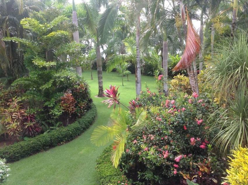 selea garden