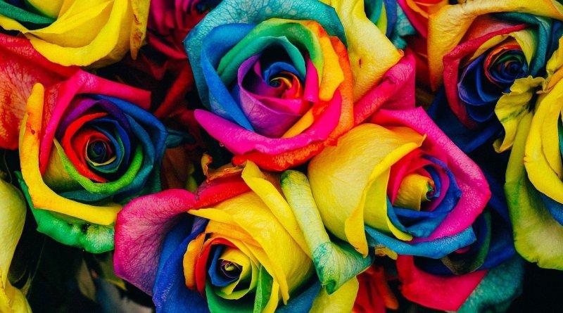 розы раскрашенные