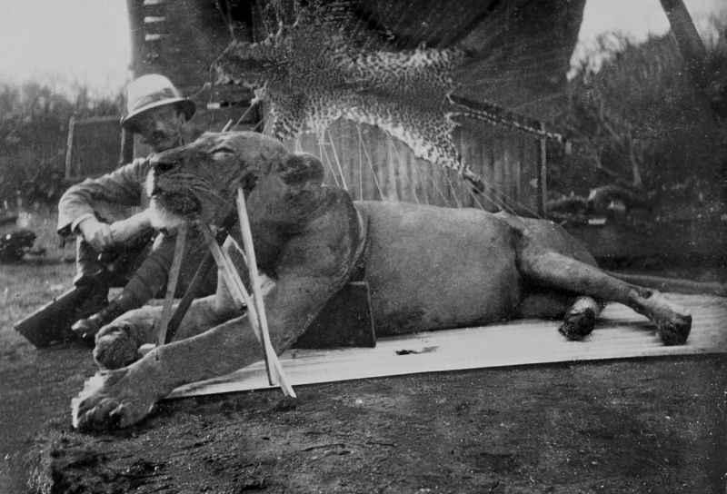 Mistério sobre leões que mataram 135 pessoas finalmente é desvendado