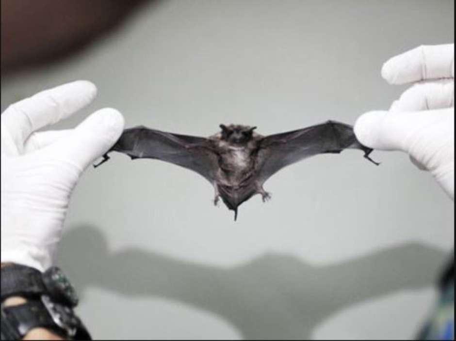 Bahia tem aumento de casos de ataques de morcegos a humanos