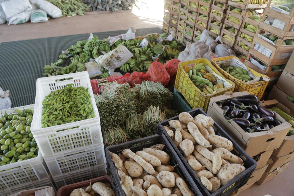 Chamada pública para agricultores familiares de Araguaína