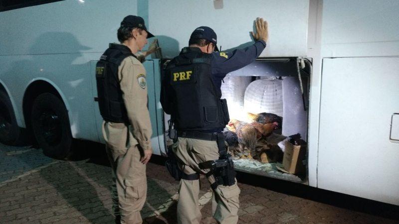 PRF multa ônibus clandestino com estrangeiros sem documentação, contrabando e galinhas