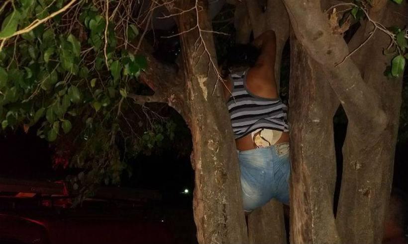 Mulher fica presa em árvore ao tentar entrar na casa do ex no Norte de Minas
