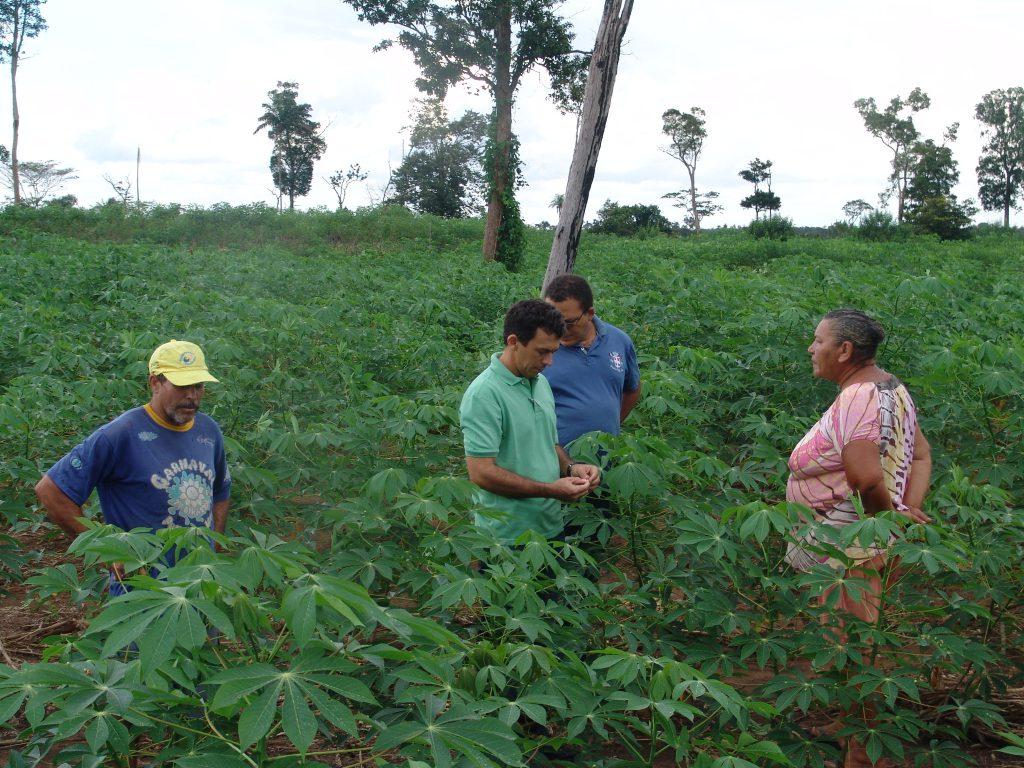 Mandioca irrigada é tema de dia de campo em Paraíso do Tocantins