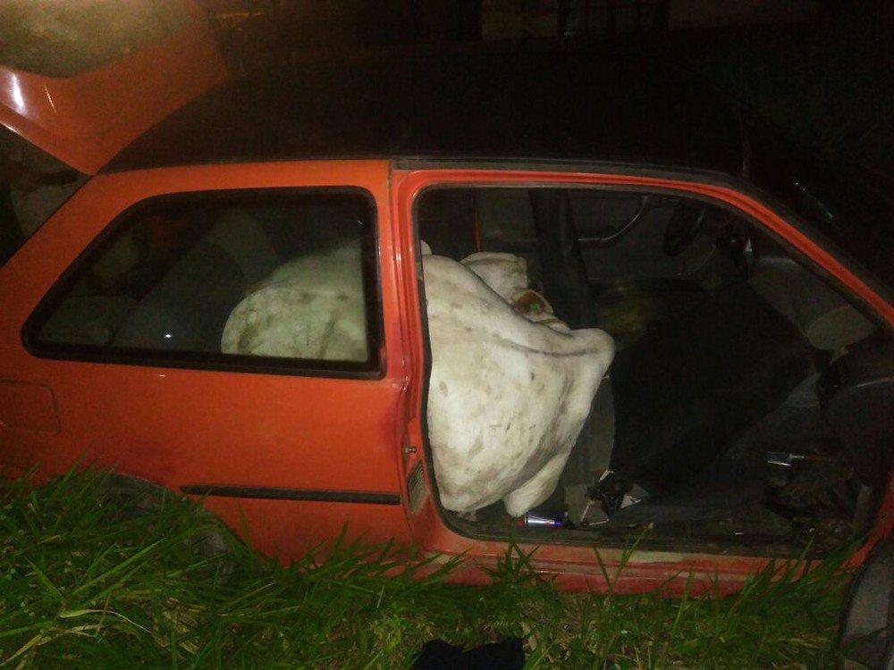 Ladrões furtam boi e fogem com o animal dentro de carro em Tijucas