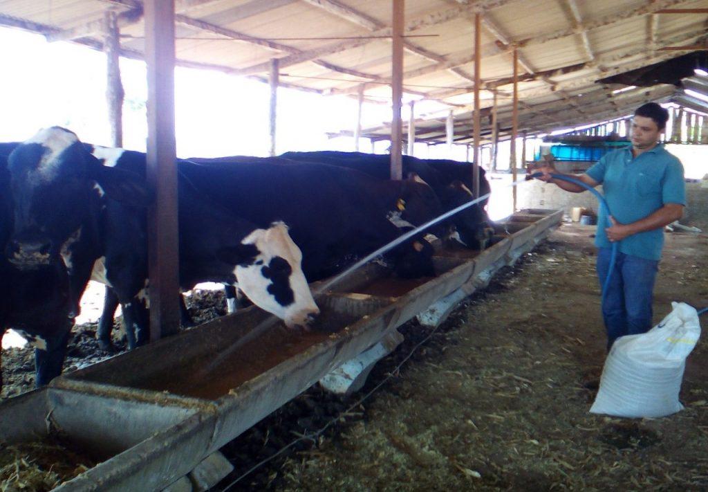 Produtor Rural amplia produção leiteira após orientação do Sebrae