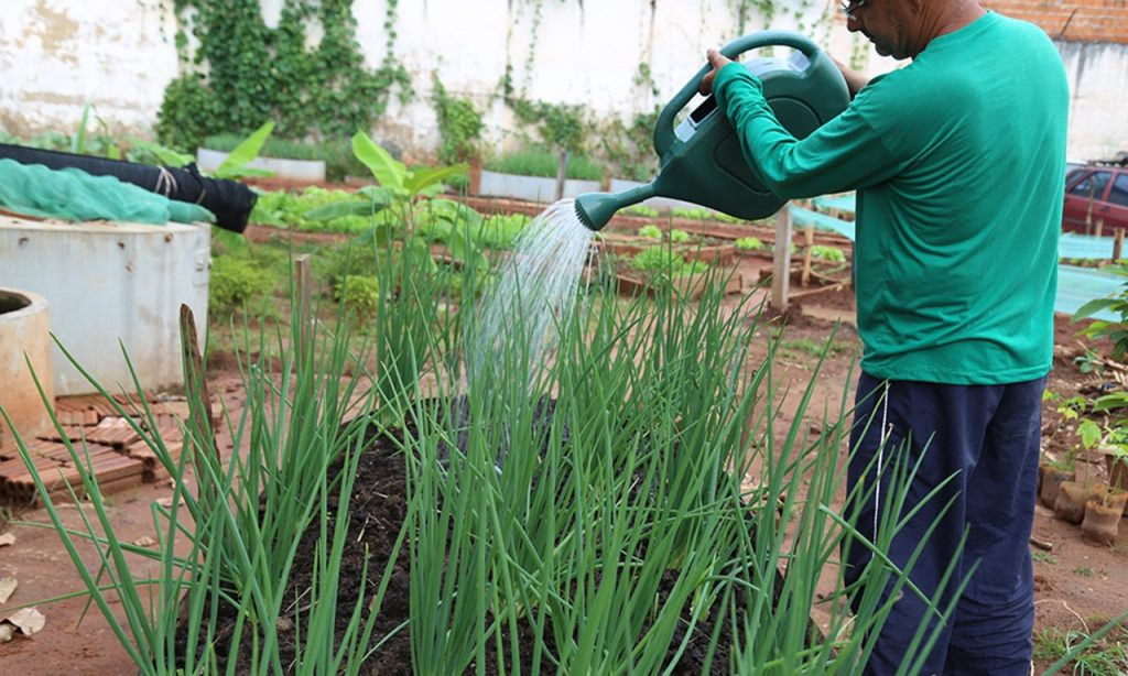Embrapa lança cultivar de cenoura para sistema orgânico na AgroBrasília Digital 2020