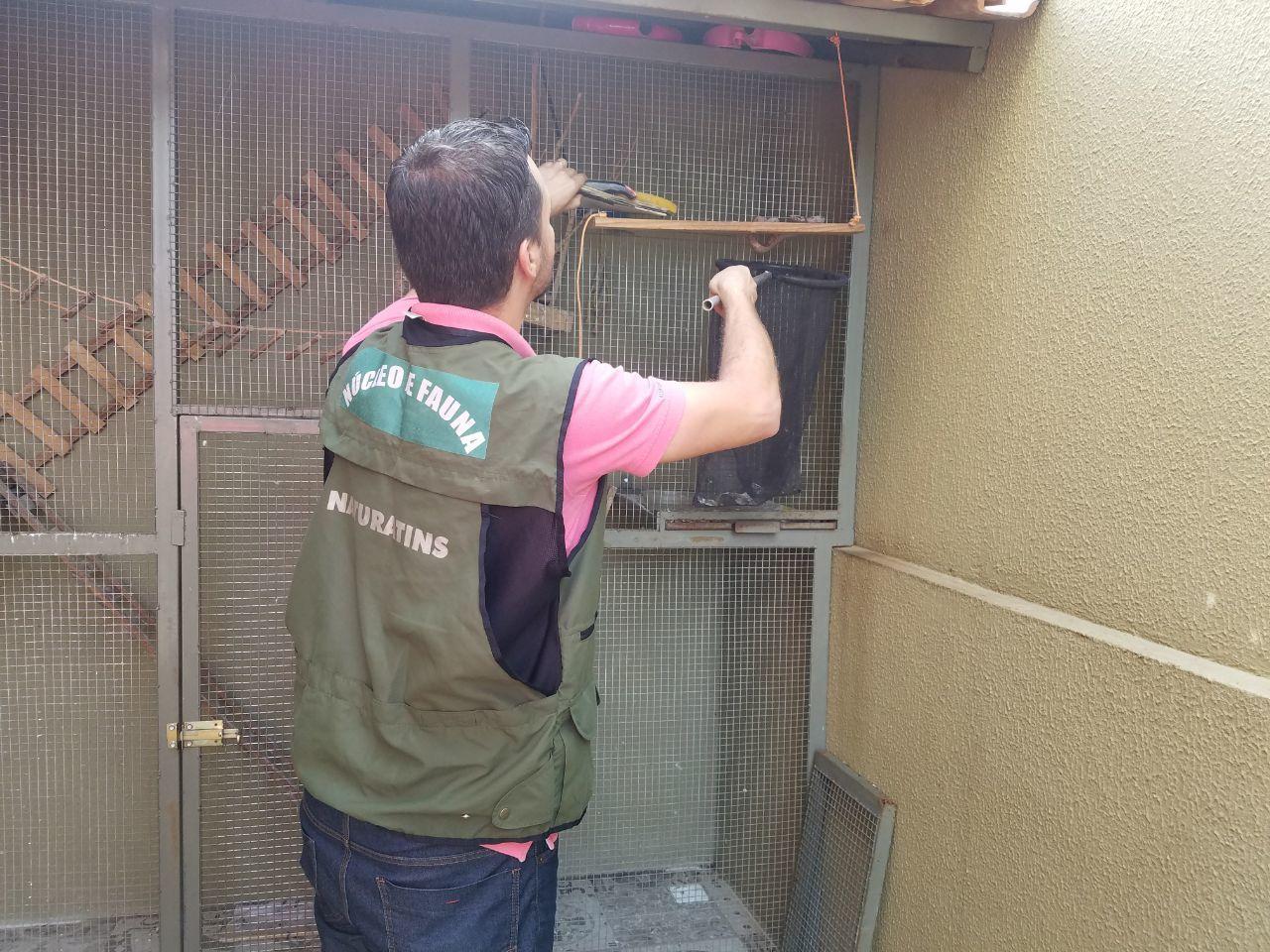 Equipe de Fauna do Naturatins resgata jiboia em residência na região sul de Palmas