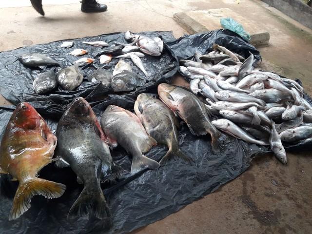 Pescador profissional é preso e multado por transportar peixes acima do permitido
