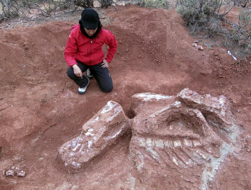 Descoberto na Argentina dinossauro gigante de mais de 200 milhões de anos