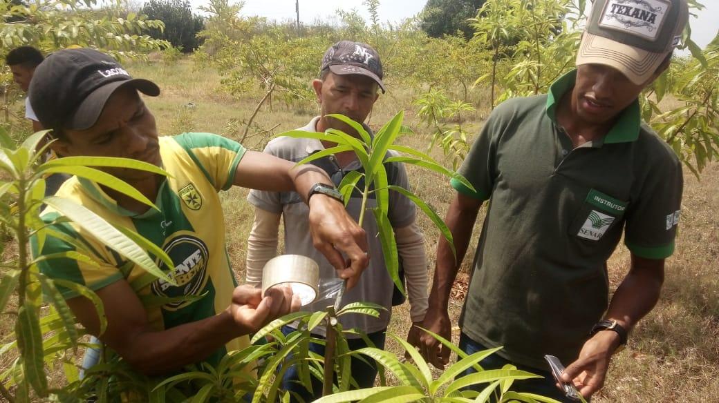 SENAR leva capacitação para produtores de Almas através do curso Trabalhador na Produção de Mudas – Viveirista