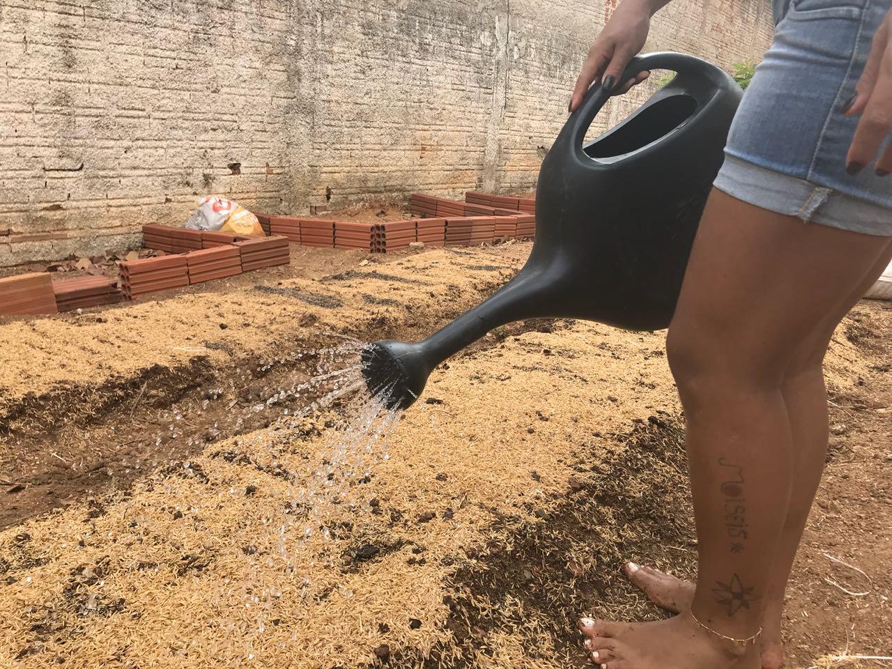 Cultivo de hortaliças vai proporcionar trabalho e aprendizado para internas do regime fechado