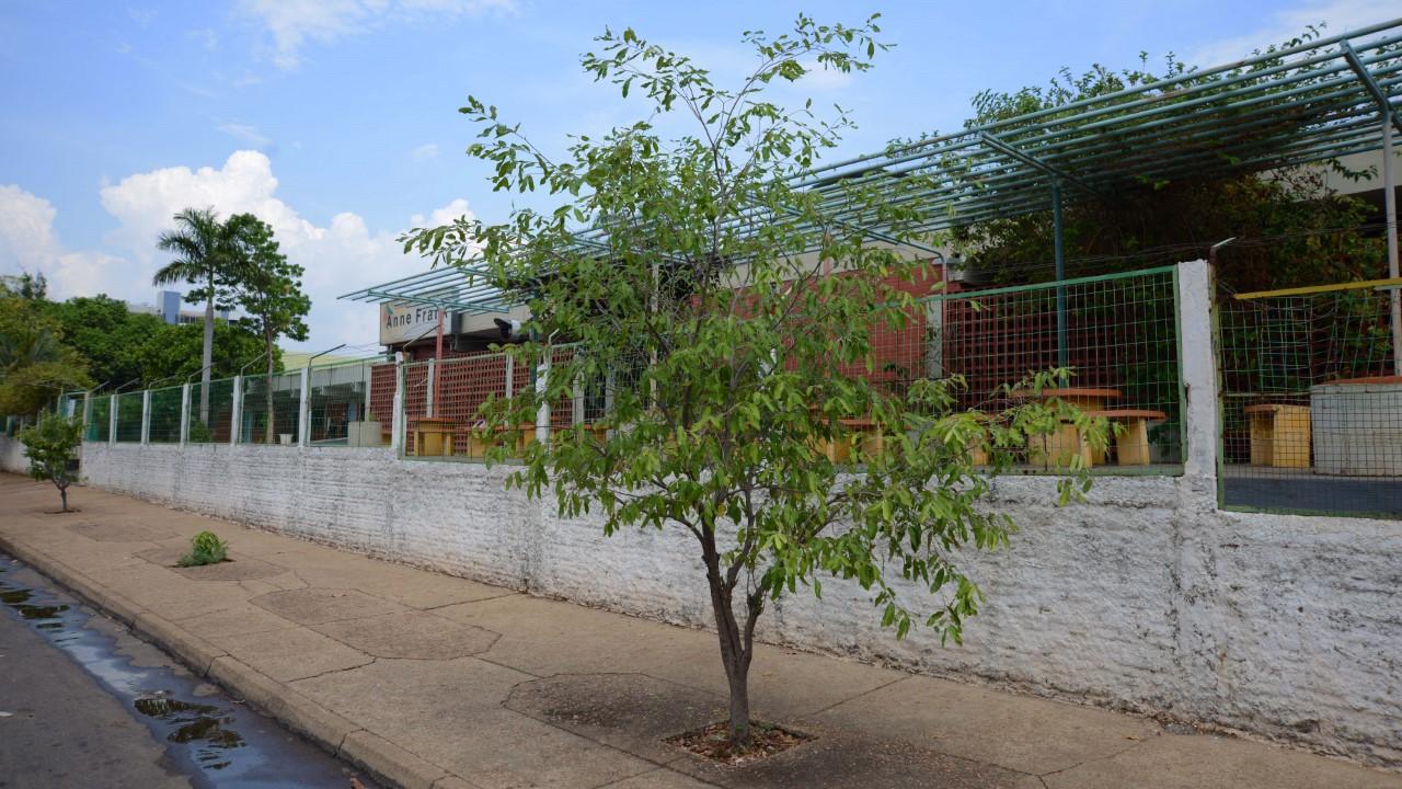 Pé de Sombra: Entorno de escolas e Cmeis tem arborização ampliada com plantio de 1.805 mudas