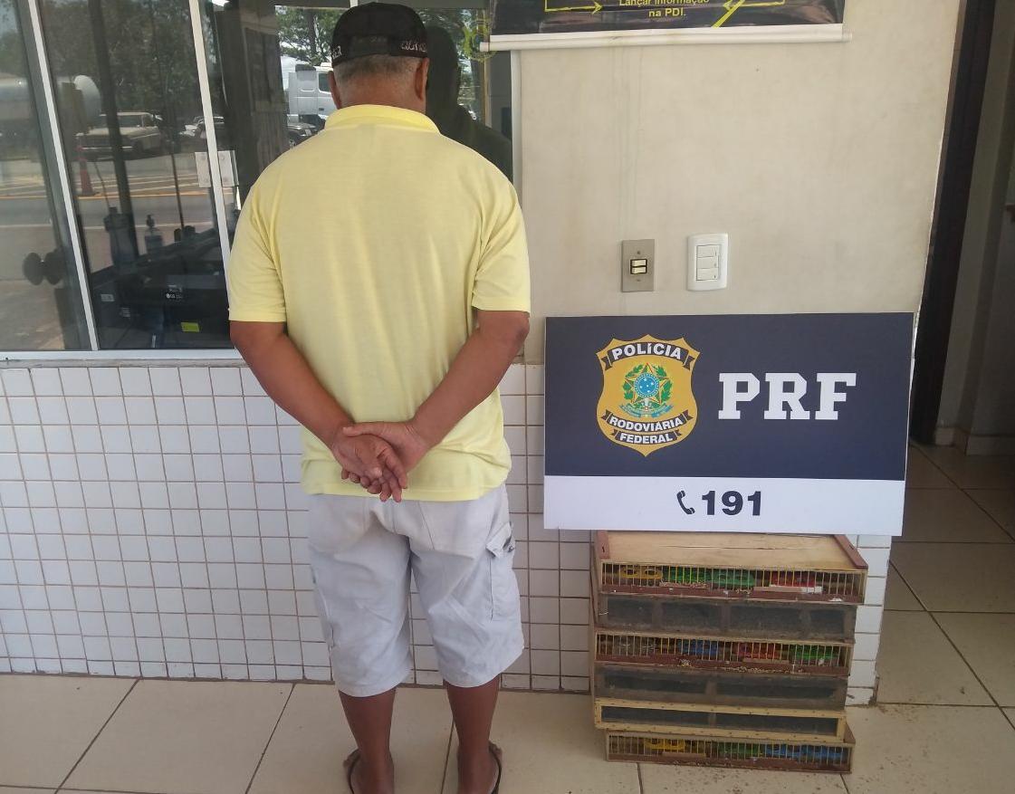 PRF e Naturatins resgatam 170 pássaros vítimas do comércio ilegal