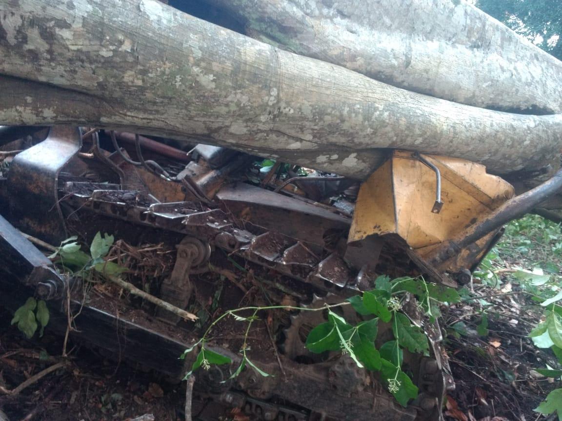 Árvore cai e mata tratorista em Dois Irmãos (TO)