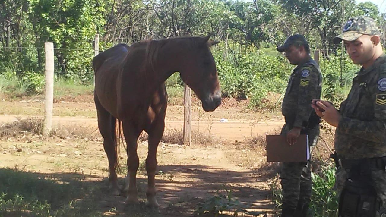 GMP auxilia no resgate de animal vítima de maus tratos localizado próximo a Praia dos Buritis