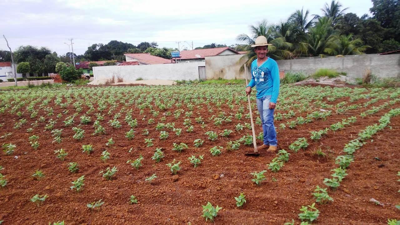 Agricultura urbana em Marianópolis produz saúde e gera renda para a população