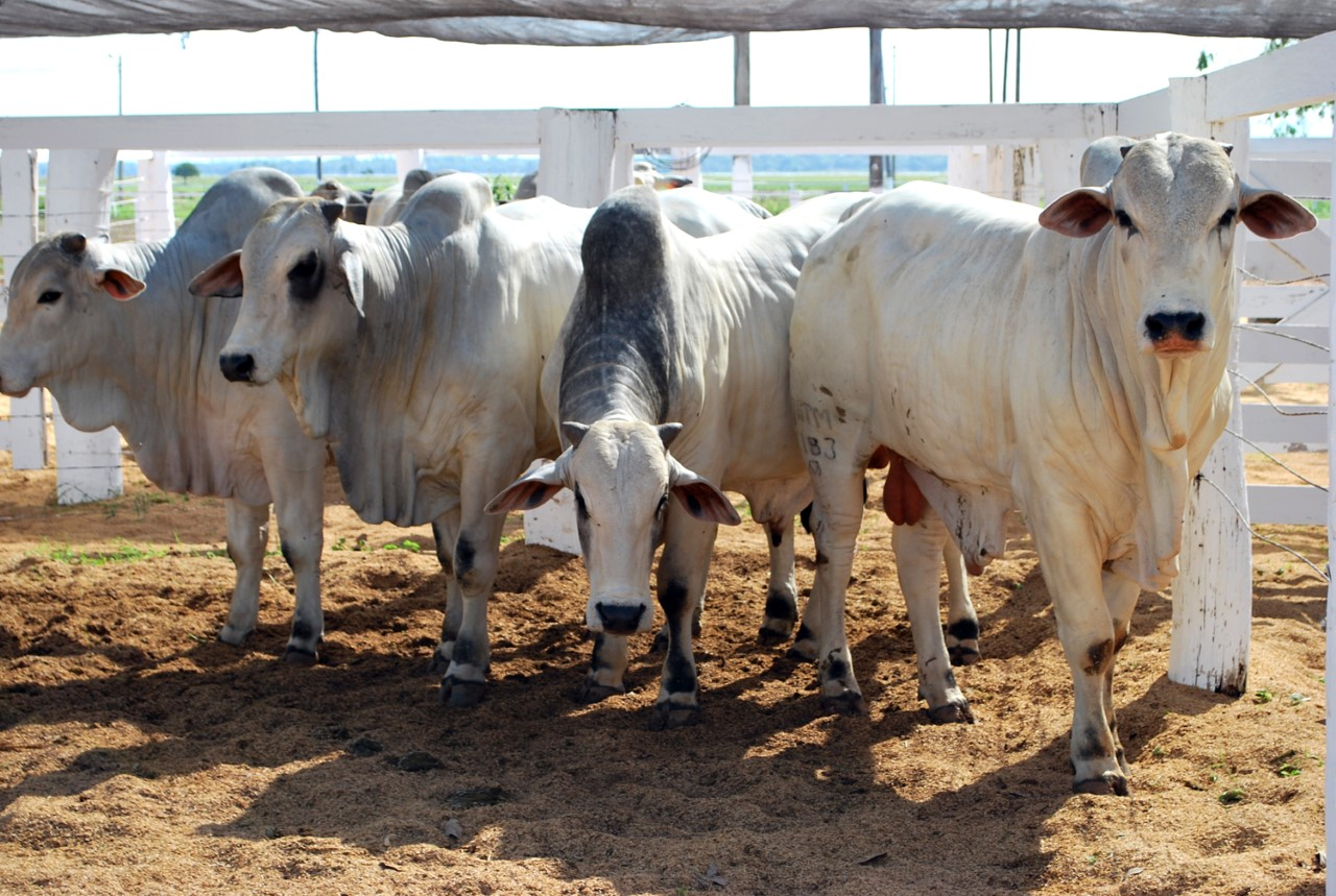 Adapec normatiza taxa única para exposições agropecuárias e promove economia aos sindicatos rurais