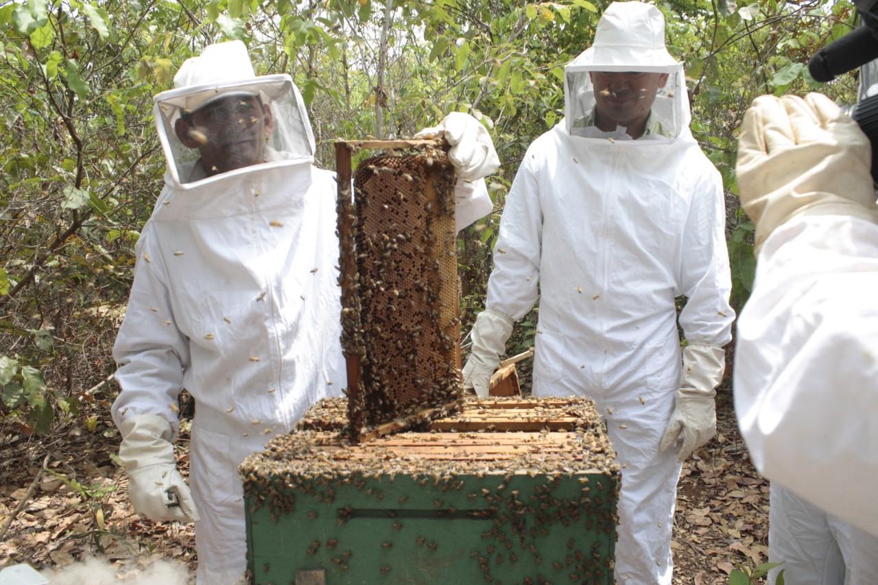 Governo prorroga prazo do edital para fortalecer cadeia produtiva do mel no Tocantins