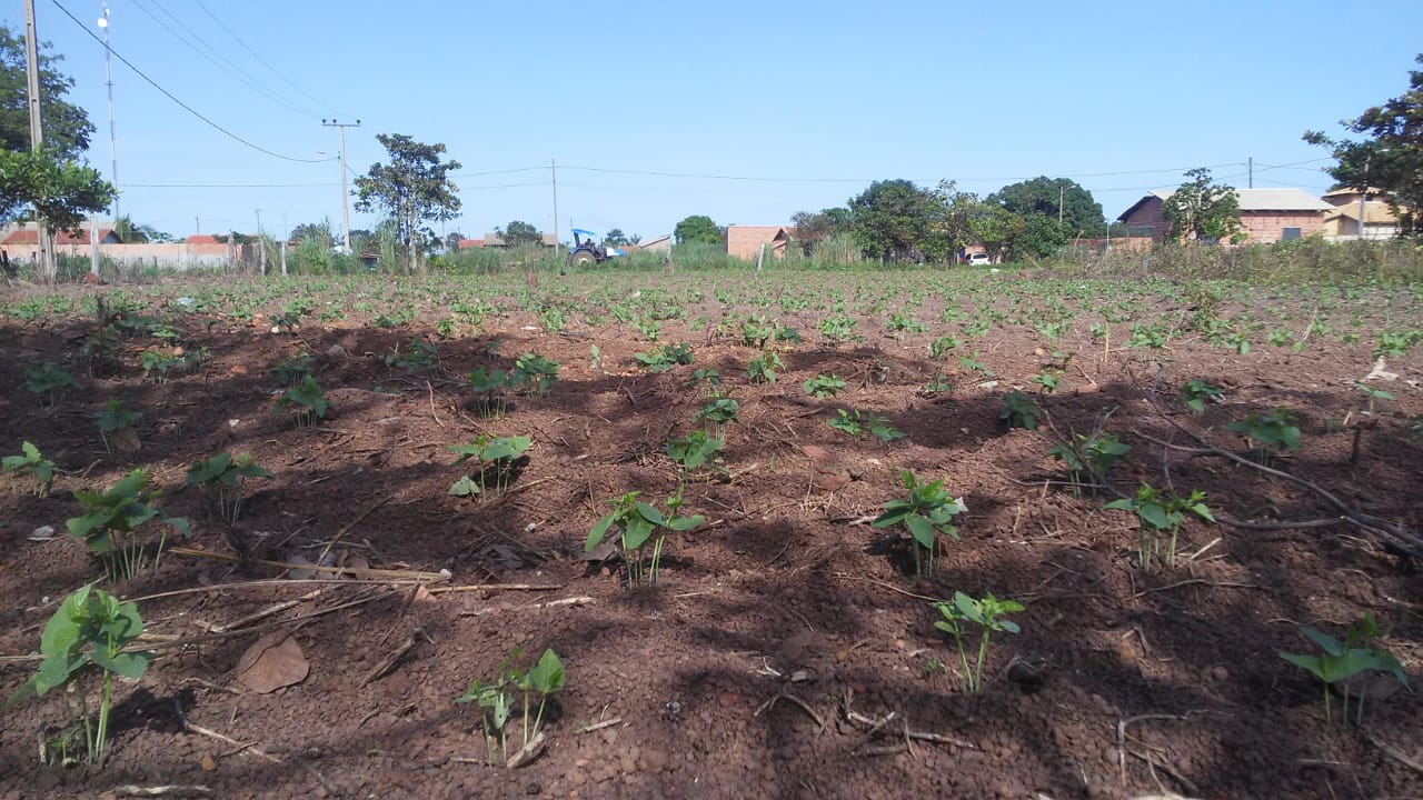 Prefeitura de Marianópolis finaliza limpeza de lotes para o projeto Agricultura Urbana