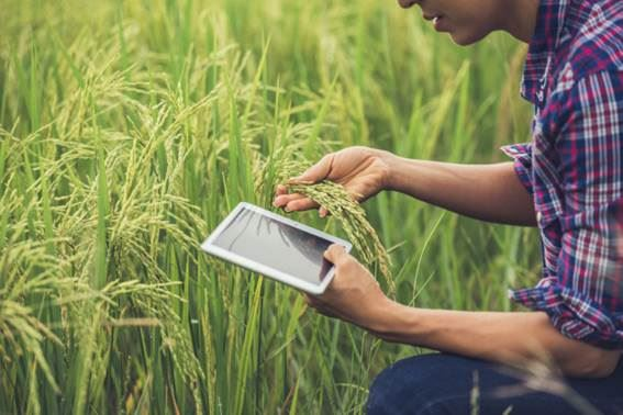 Agronegócio em Novembro: Sequência de Boas Notícias