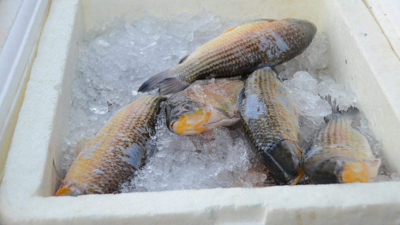 Vendas de pescado na Páscoa superam as expectativas dos feirantes, com crescimento de 30% com relação ano passado
