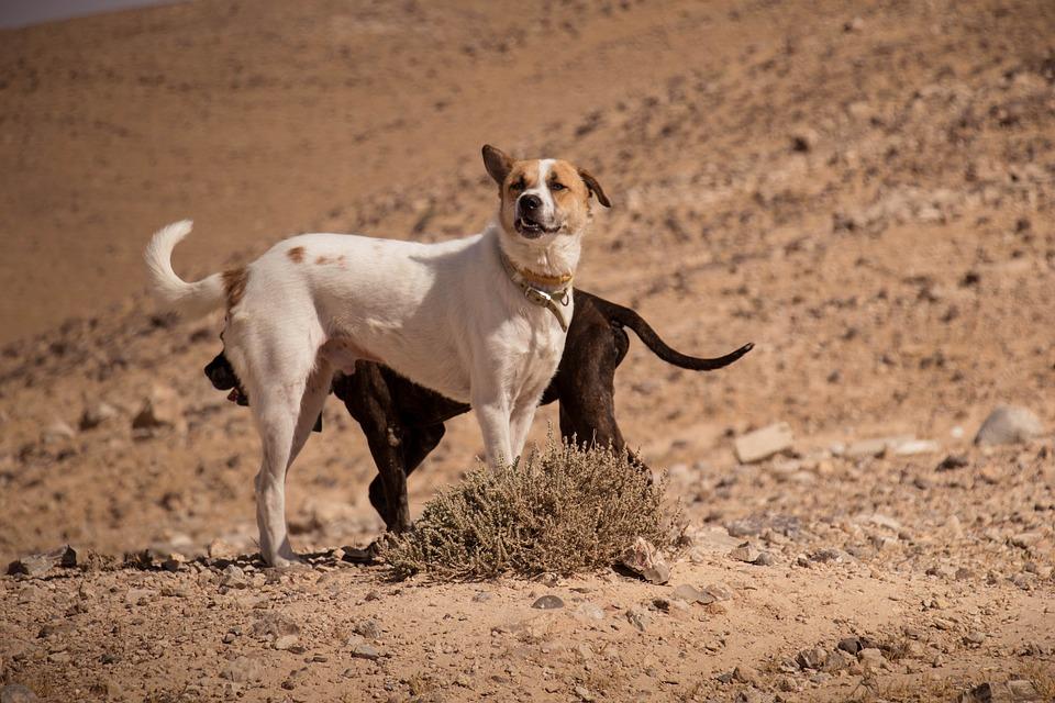 Causa  animal: é preciso abrir os olhos para os cães e gatos em situação de abandono