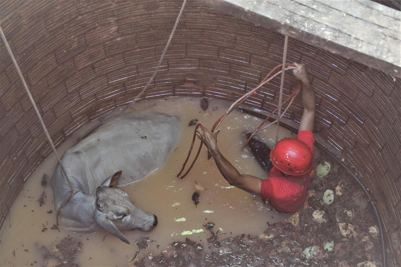 Bombeiros Militares resgatam animal em poço na zona rural de Palmas