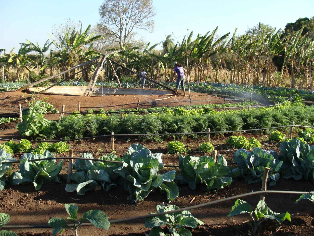 Encontro mostra às mulheres rurais como organizar quintal produtivo agroecológico