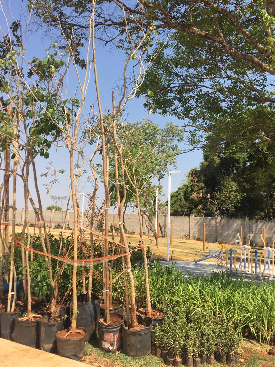 Áreas verdes em condomínios horizontais contribuem para preservação do cerrado